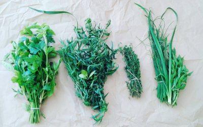 Predavanje Izdelava tinktur za notranjo uporabo s Herbiono